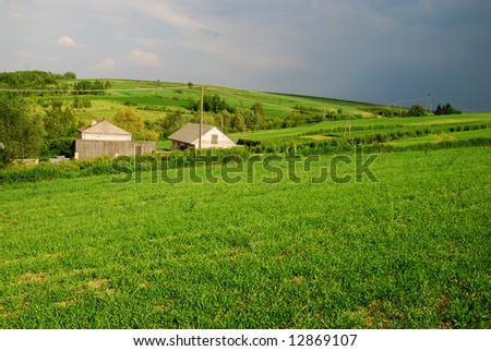 green field and tree landscape
