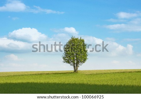 Green field and tree under blue sky - stock photo