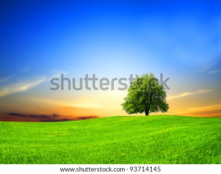 Green field at sunset - stock photo