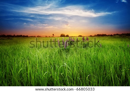 Green field at twilight. - stock photo