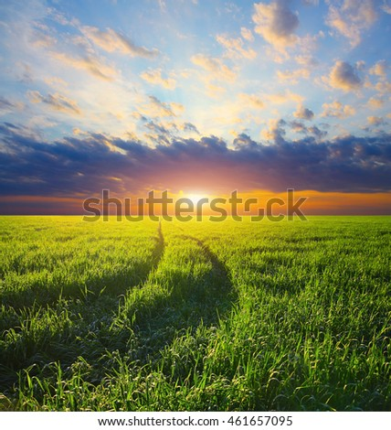 Green field. Beautiful landscape. Track in a barley field on a sunset in sunshine