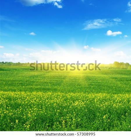 Green field,blue sky and sun. - stock photo