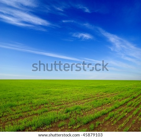 green field by a spring day