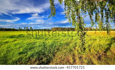 Green field. Classic countryside landscape - stock photo
