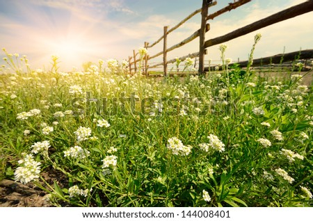 Green field evening time with cattle fence - stock photo