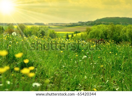 Green field evening time. Yellow toning - stock photo