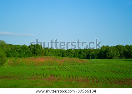 Green field, forest and blue sky. Shallow DOF