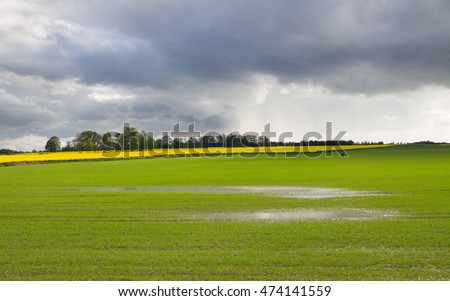 Green field in puddle.