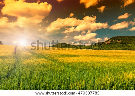 Green field in sunset sky