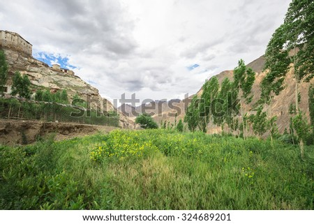 Green field in valley in Leh Dalakh,India - stock photo