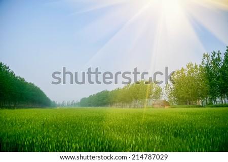 green field in warm sunshine - stock photo