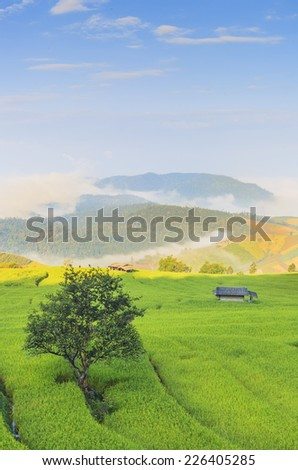 Green field landscape and fog as background - stock photo
