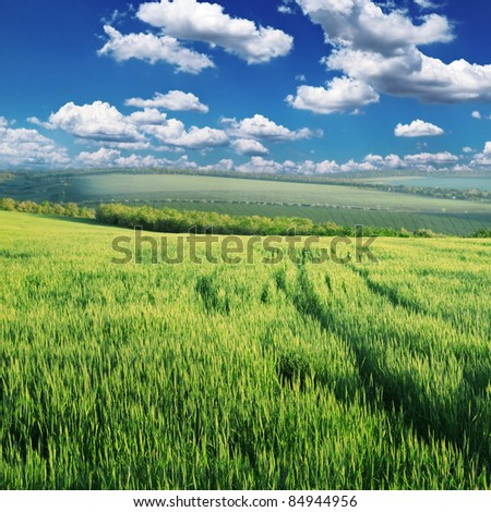Green field lighted morning sun - stock photo