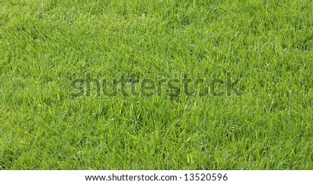 Green field of grass photographed in spring - stock photo