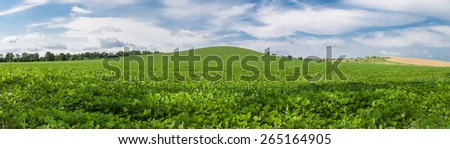 Green field of soybeans and yellow wheat field in the distance against a blue sky with white clouds, panoramic photo - stock photo