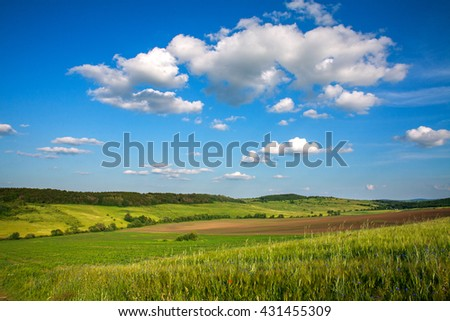 Green field of wheat growing on blue sky background