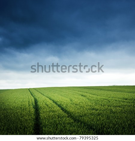 Green field on a cloudy day - stock photo