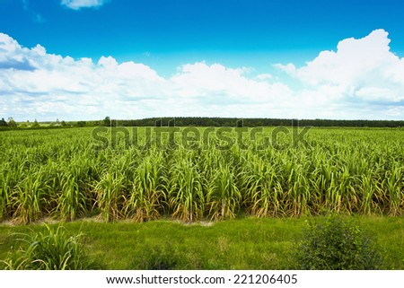green field on sunny day - stock photo
