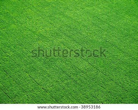 Green field pattern. View from above. - stock photo