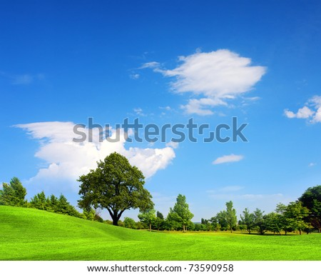 Green field, springtime - stock photo