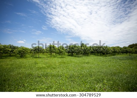 Green field ,trees and blue sky - stock photo