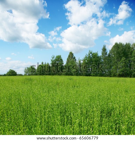 Green field,trees and blue sky. - stock photo