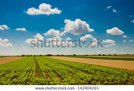 Green field under beautiful dark blue sky.Field of grass and perfect blue sky.hilly field with fluffy white clouds in the blue sky.Landscape of field and sky.Wheat field over cloudy sky - stock photo