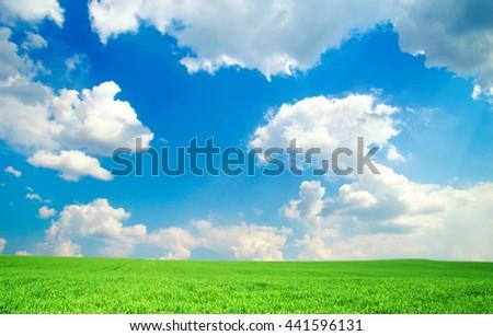 Green field under blue sky - stock photo