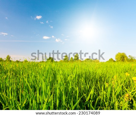 Green field under blue sky with sun - stock photo