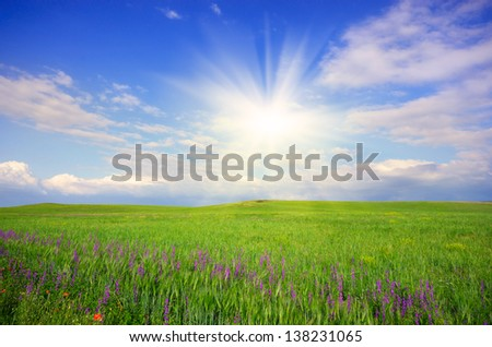 Green field under blue sunny sky - stock photo