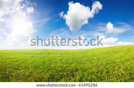 Green field under midday sun - stock photo