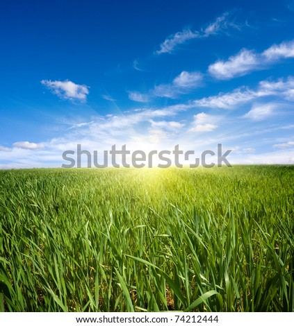 Green field under nice sky - stock photo