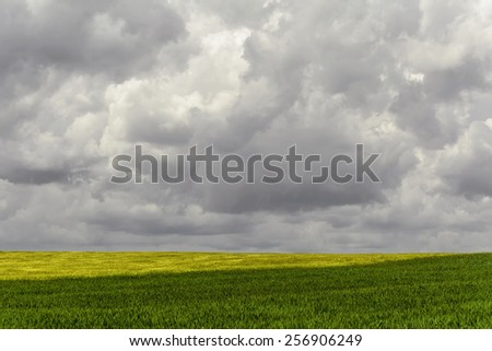 Green Field Under The Gloomy Sky