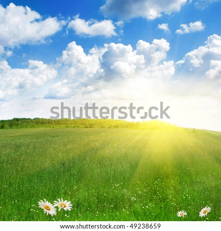 Green field,white daisies and sun. - stock photo