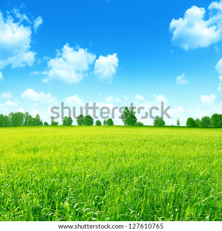 Green field with a row of  trees on horizon and blue sky with clouds. - stock photo