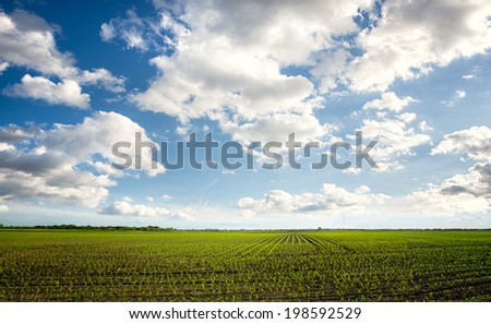 Green field with beautiful sky, agricultural composition - stock photo