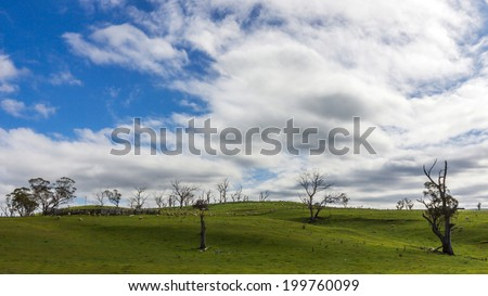 Green field with blue and white sky - stock photo