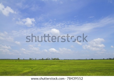 Green field with blue sky, nature background