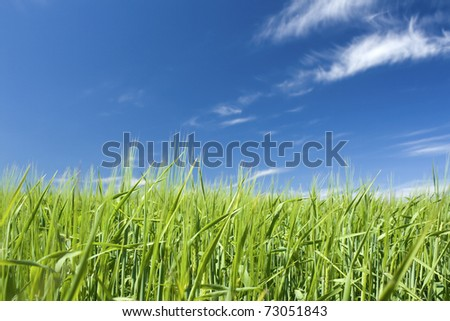 Green field with blue summer sky - stock photo