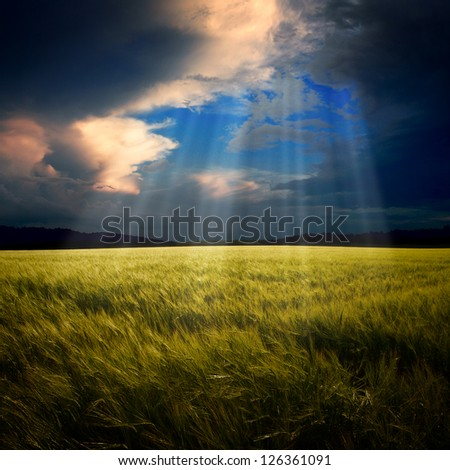 Green field with bright sky - stock photo