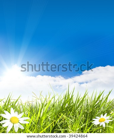 Green field with chamomile  flowers and sunray - stock photo
