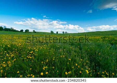 Green field with clouds and blue sky