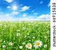 Green field with daisies and blue sky with sun. - stock photo