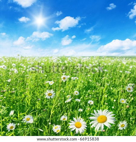 Green field with daisies and blue sky with sun.