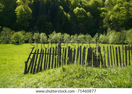 Green field with fence and forest in the spring - stock photo