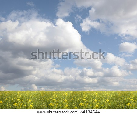 Green field with flowers under blue cloudy sky - stock photo
