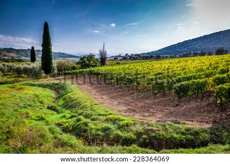 Green field with grapes in Tuscany - stock photo