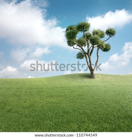 Green field with olive tree - stock photo