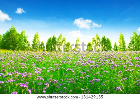 Green field with pink wildflowers and blue sky with white clouds. - stock photo