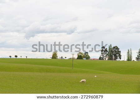 Green Field with Sheep